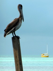 Pelican on a stick