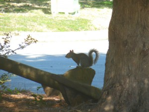 A well-fed squirrel