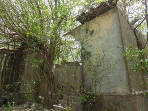 Ruined plantation house