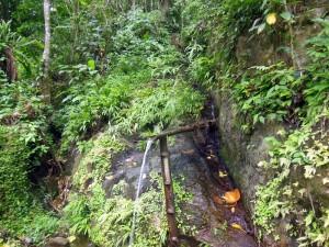 Jungle water fountain