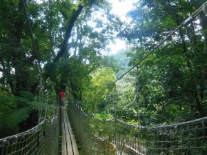 The canopy walkway