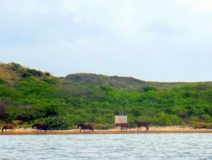 Wild horses at Salina del Sur
