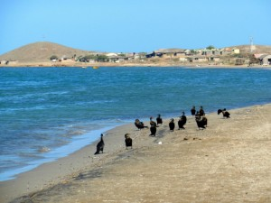 Huaraticheru Bay with cormorants