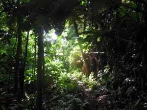 A narrow path through the jungle