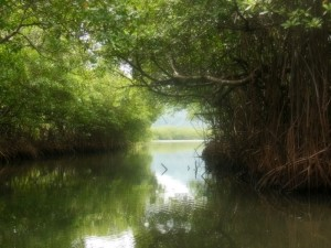 A narrow channel through the mangroves