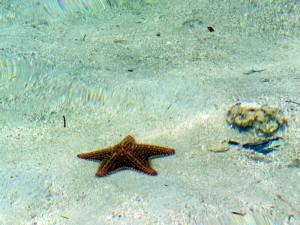 Starfish on my doorstep