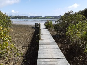low tide with mangroves and mudflats